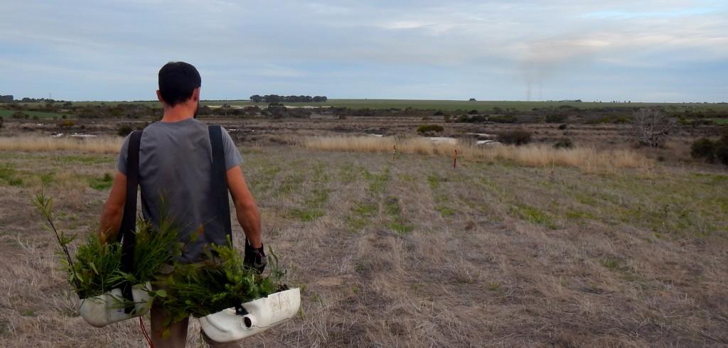 Planter des arbres dans l'outback australien