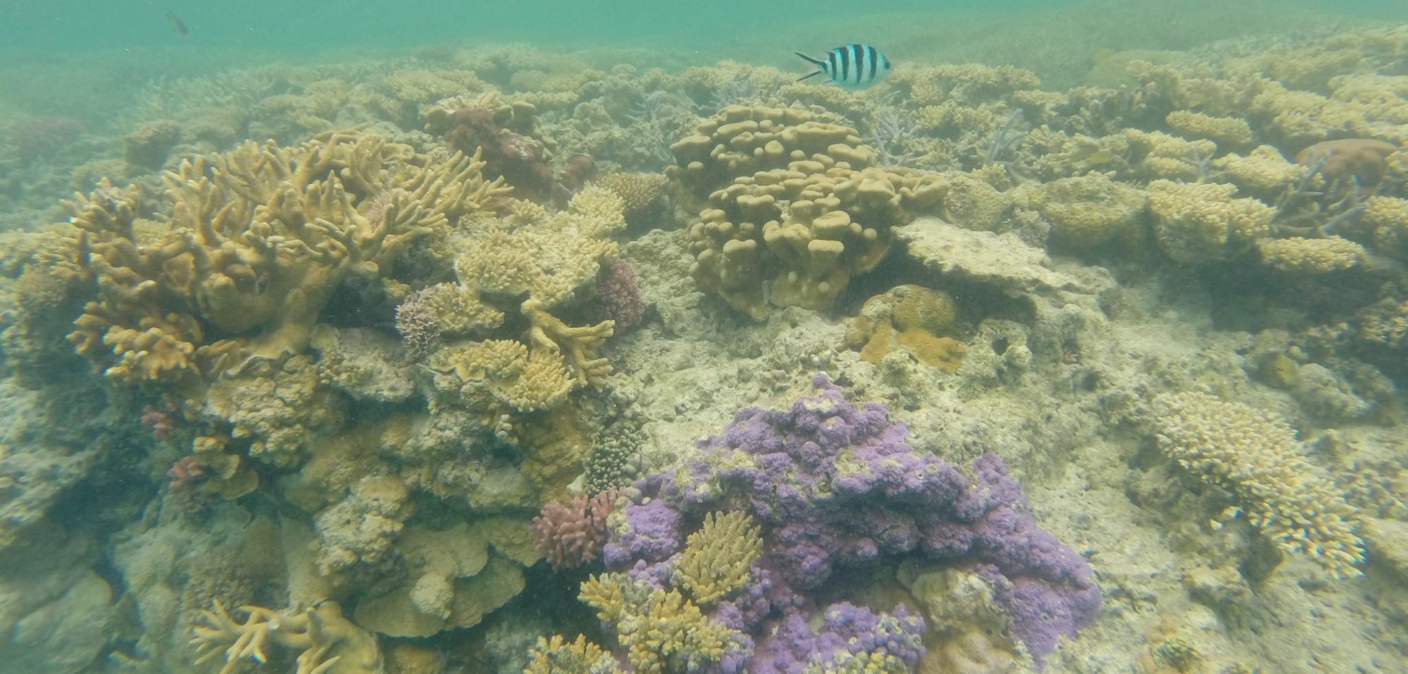 Snorkeling depuis Lady Musgrave Island