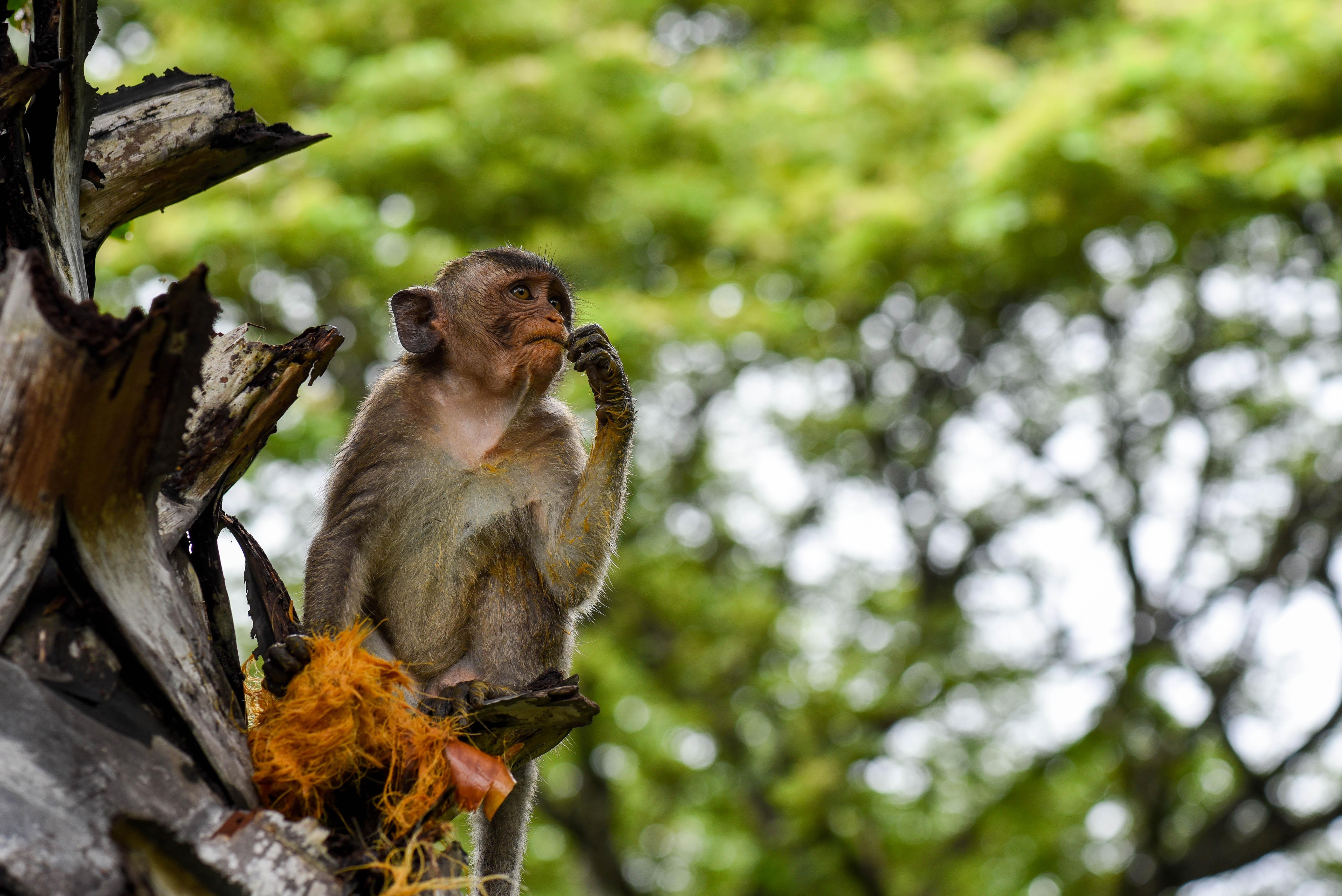 Les singes des temples d'Angkor qu'il ne faut pas nourrir @neweyes