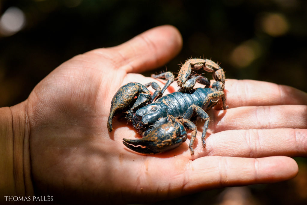Un scorpion à Khao Yai @neweyes