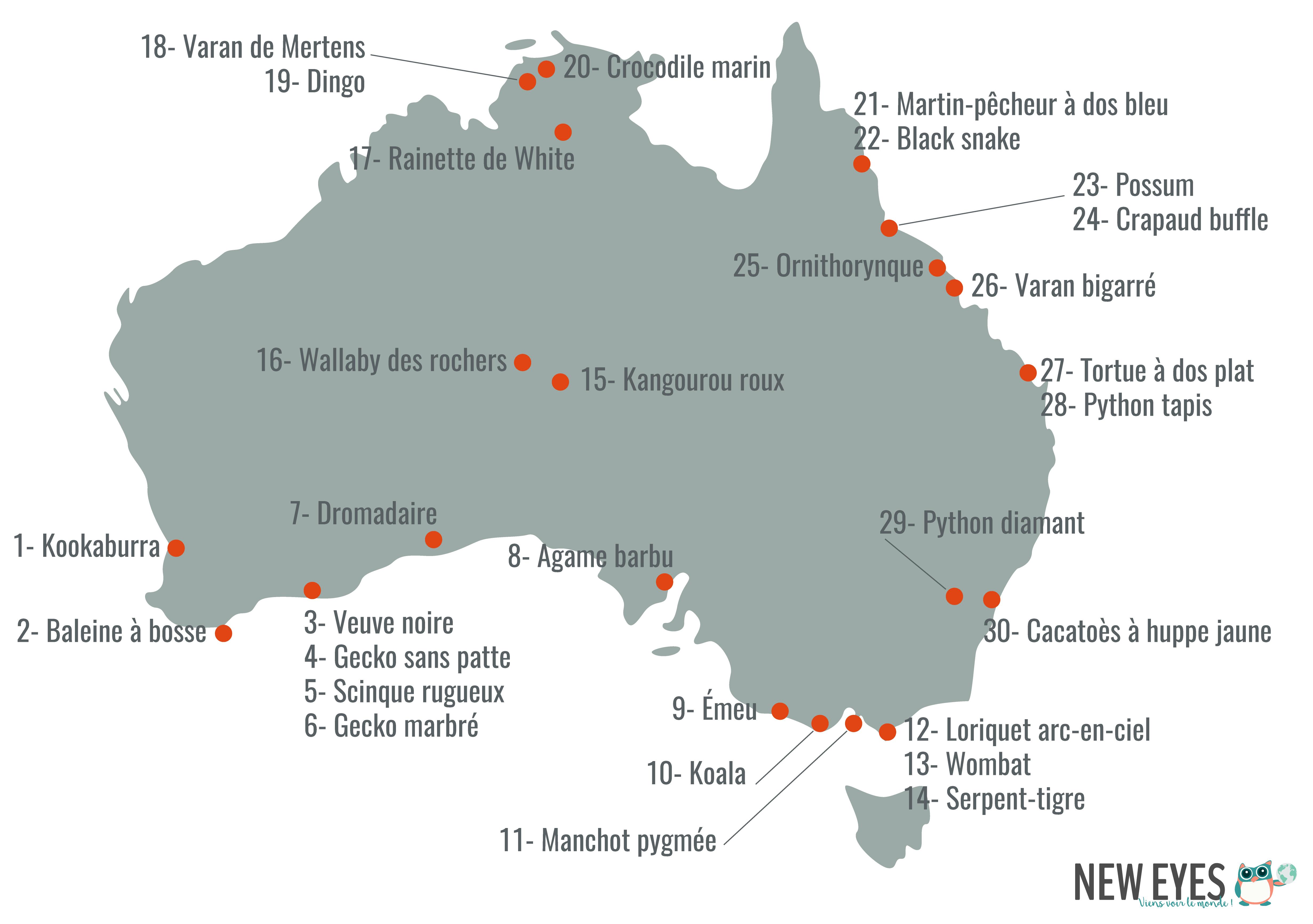 Carte des animaux d'Australie
