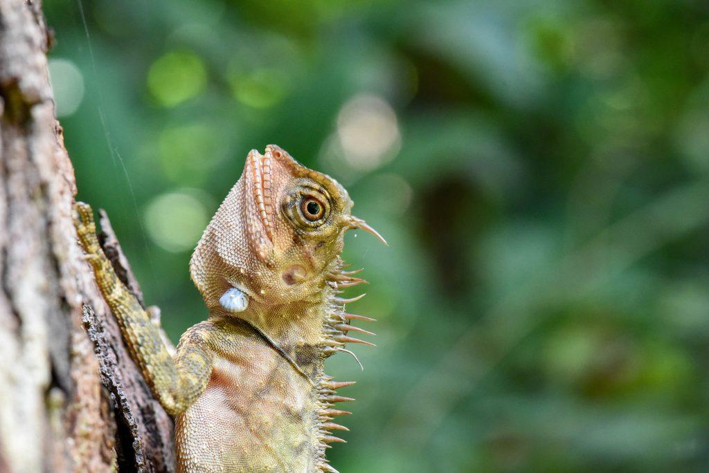 La faune sauvage du Parc National de Penang @neweyes